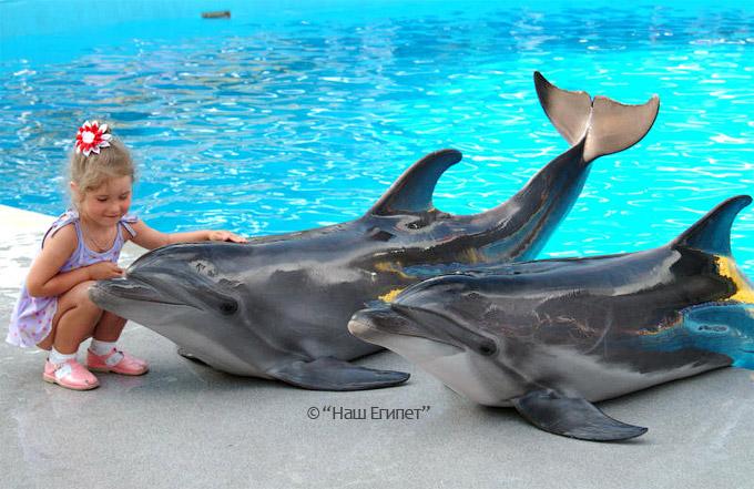 Дельфинарий в Шарм эль Шейхе, Египет