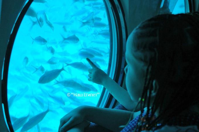 Экскурсия на подводной лодке в Шарм эль Шейхе