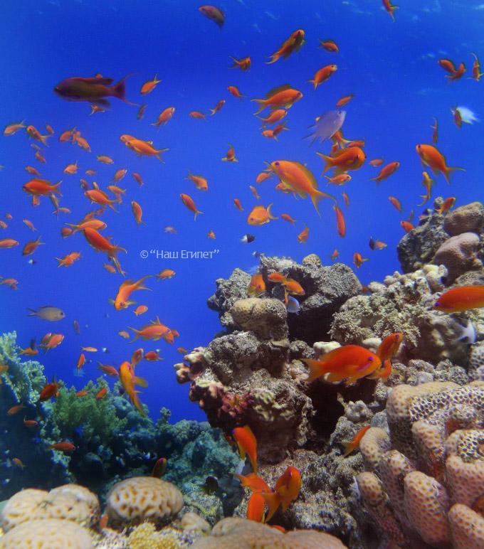 Рас Мухамед экскурсия по красном море